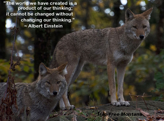 The world as we have created it is a process of our thinking. It cannot be changed without changing our thinking bantrapping, MakeFurHistory