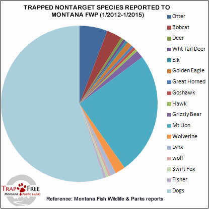 Graph of Non-Target Wildlife Captured in Wolf and non Wolf Traps Reported to FWP 2012-2015