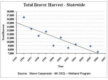 Graph showing beaver take from 1900 of 16,000 to present day with a take of less than 7000 - showing a sharp decline